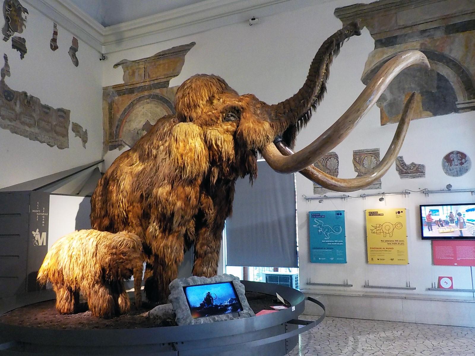 image of Museo di Scienze Naturali e Archeologico